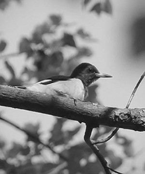 Small bird on a branch.