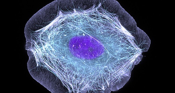 Microscopic skin cell