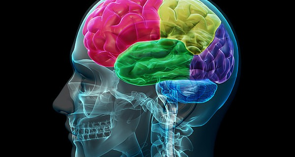 Areas of the brain highlighted in different colours.