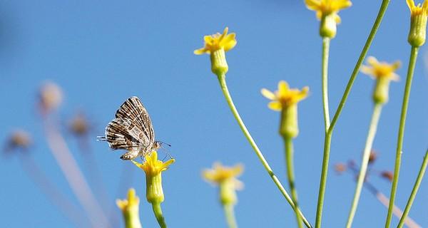 Wild flowers against a clear blue sky
