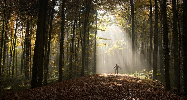 Person bathed in sunlight in a forest
