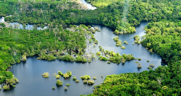 A birdseye view of a section of the Amazon rainforest