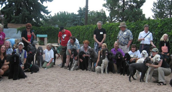 Meetup Denver's poodle club